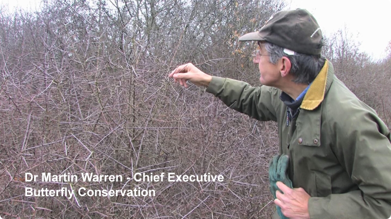 Dr Martin Warren Butterfly Conservation