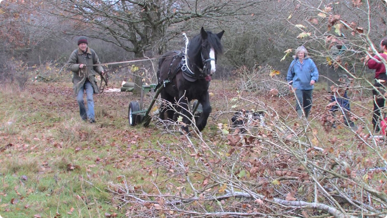 Pony pulling felled Timber