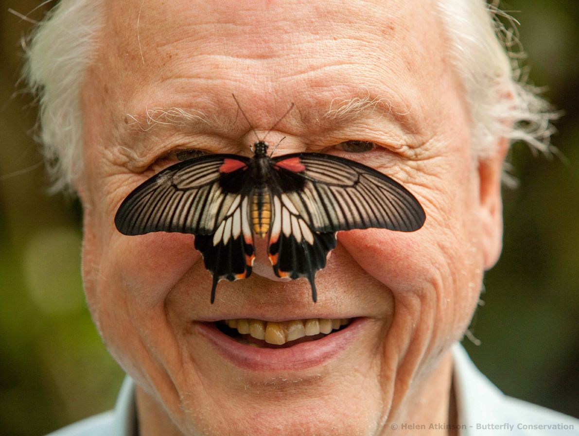 Sir David Attenborough launches Big Butterfly Count 2012