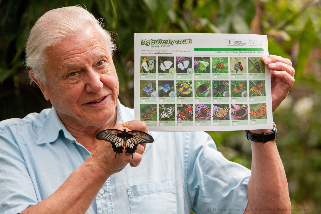 Sir David with Big Butterfly Count ID Chart