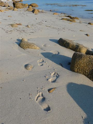 Beach footprints on the Scilly Isles