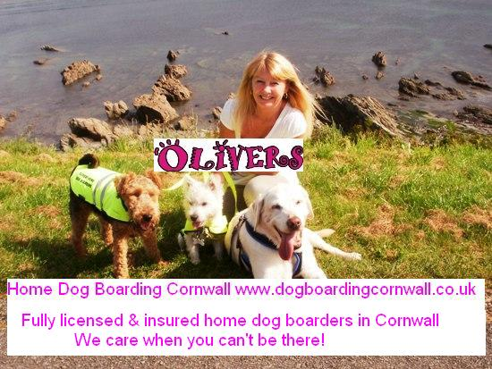 Cornwall dog home boarding