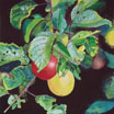 Painting / Biss Meadows: Cherry Plums